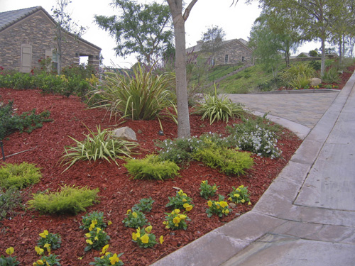 Drought-Resistant Landscaping